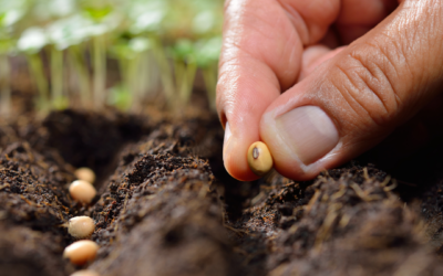 Planting Seeds for a Better Tomorrow
